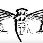 cicada(シケイダ)3301 cicadaの意味は?現在2017年の答えは?真相は解読された!?